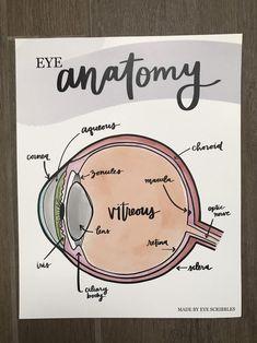 Optometry School, Optometry Humor, Eye Anatomy, School Organization Notes, Nursing School Notes, Biology Lessons, Science Notes, Medical Anatomy, School Study Tips