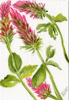 Original Red Clover watercolor painting floral by SharonFosterArt, $18.00
