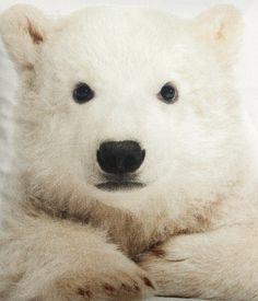 Polar Bear Pillow Art   H&M US