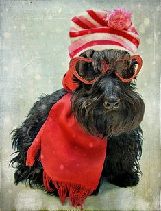 I'm Ready! I'm too sexy for my HAT, too sexy for my SCARF,  too sexy for my SHADES...TOO SEXY!!