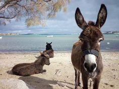 Happy Sunday from these three peaceful Donkeys on Kolimbithres beach, Paros Island in Greece. On my bucket list :D ~ Ariane ❤️ https://obscurantor.wordpress.com/2015/06/01/the-donkeys-of-kolimbithres-beach/