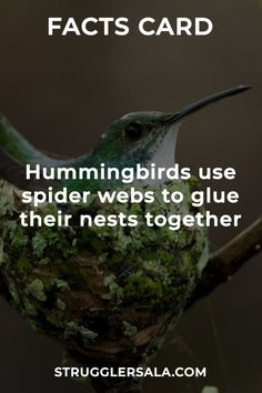 Needs to show concern of their life and to keep the nest strong. True Interesting Facts, Some Amazing Facts, Interesting Facts About World, Intresting Facts, Unbelievable Facts, Wierd Facts, Wow Facts, Real Facts, Wtf Fun Facts