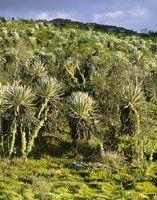 En los páramos colombianos se alternan momentos de mucha radiación solar con otros muy nublados.