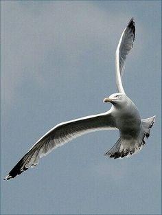 Nature Forest Winter Trees 38 New Ideas Seagulls Flying, Photo Animaliere, Shorebirds, Tier Fotos, Sea Birds, Wild Birds, Beach Scenes, Winter Trees, Beach Art