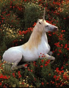 In the roses #unicorn