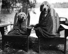 bruce weber and labs - Yahoo Image Search Results