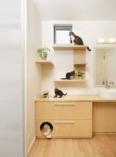 Cool cat hang out!  #petfriendlyhomes  #catshelves homechanneltv.com