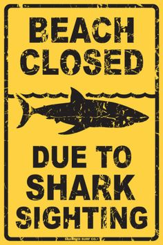 1000 images about shark signs on pinterest sharks