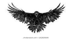 Find Painted Portrait Raven On White Background stock images in HD and millions of other royalty-free stock photos, illustrations and vectors in the Shutterstock collection. Thousands of new, high-quality pictures added every day. Grey Ink Tattoos, Body Art Tattoos, Crow Tattoos, Phoenix Tattoos, Ear Tattoos, Flying Raven, Tattoo Espalda, Rabe Tattoo, Symbols Of Strength Tattoos