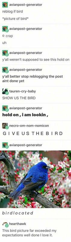 REBLOG IF BIRD
