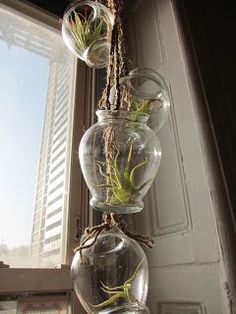 Craftaholics Anonymous® | DIY bottle collection of air plants! These hip plants fashion up any home.