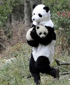 I would totally do this. He's stealing the baby panda, right?