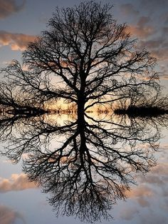 reflections - by Repinly.com