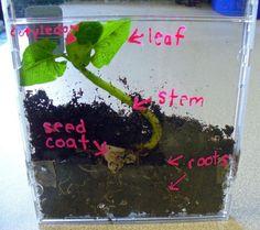 Biology plant DIY