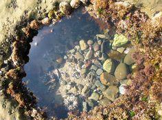 Laguna Beach tide pools