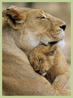 Image result for Lionesses