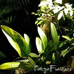 Iluminação cênica é tudo no paisagismo! By Katya Francisco JARDINS DO FUTURO HOJE.......CASAS DO FUTURO HOJE. #arquiteto #arquitetura #arquiteturadapaisagem #casainteligente #arquitetopaisagista #espacodelazer #casadofuturo #contemporarygarden #bioarquitetura #ambienteexterno #arquiteturapaisagistica #jardim #katyafrancisco #landscapedesign #moderngarden #paisagismo #sustentabilidade #tecnologia #tendenciaarquitetura #projeto #iluminacaosolar #paisagista #casacor #giardino…