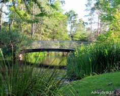 Urban Tranquility.  Even in the 4th largest metropolitan area in the country beautiful scenes like this can be found.  This is spring in The Woodlands, Texas