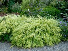 You can count on these beautiful, low-maintenance and easy-growing ornamental grasses to add color to your yard all year long.
