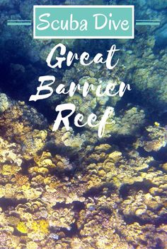 The Great Barrier Reef is a bucket list dive destination. You don't want to waste your time on mediocre diving. Find out the best scuba dive sites on the Great Barrier Reef with Expat Getaways