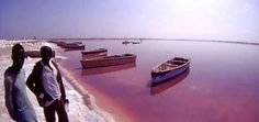 Lake Retba (Lac Rose)  Lake Retba lies north of the Cap Vert peninsula of Senegal, 40 km north of Dakar. Located in a landscape of dunes covered with palm trees and beefwood, the lake is an amazing marvel of nature, known throughout the world as the Pink Lake. It is famous for its remarkable pinkish-coloured water caused by cyanobacteria and its strong salt content that can turn to purple depending on the intensity of the rays of sunshine.  The color is particularly visible during the ...