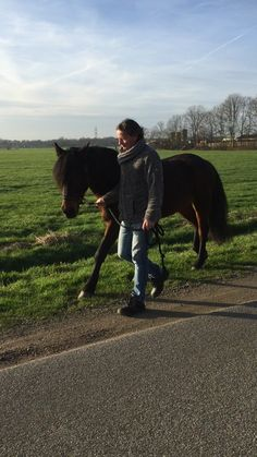NoDoubt going for a walk... #horse #NoDoubt #gelding #love #Haflo