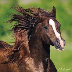 horse by Bob Langrish