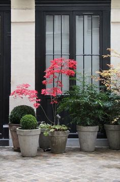 Planters in similar colors with a variety of heights and leaf shapes create a beautiful porch display.