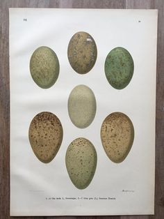 Antique large Chromolithograph of birds' eggs - Great bustard, Eurasian crane.  You can also find prints of these birds in my shop - use Search in shop's main page.   Print... #antiqueprint #originalprint #antiquewallart #walldecor #beautifulprints #vintageprint #ornithology