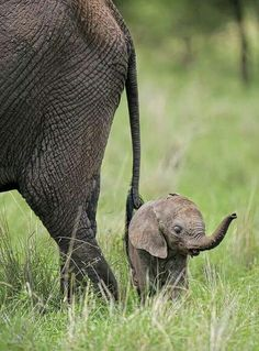 Mom and baby elephant.