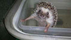 Geef me even een handdoek, ik ben klaar met mijn bad