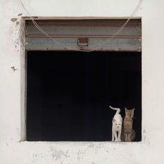 Photo: andrea tomas
