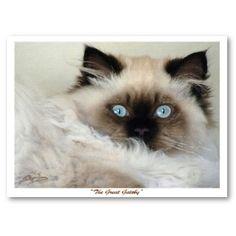 really really want a ragdoll cat