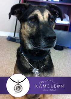 This handsome man is Shadow. He is a rescue available for adoption at the Nova Scotia Provincial SPCA Shelter. Maybe you can make a CHANGE in Shadows life or the life of a rescued pet in your area.    For more information on Shadow and his shelter pals visit their website http://spcans.ca/provincial-animal-shelter-adoptions/view-dogs.html    For adoptable pets in the USA   visit: http://www.aspca.org/  For International information visit:  http://www.spcai.org/