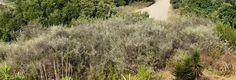 Mediterranean Gardening Blog - Uma série de artigos por Phil Thompson.