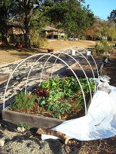Winter gardening veggies
