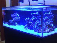 Nuvo 80 Reef