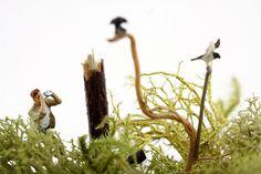 Bird Watcher | Flickr - Photo Sharing!