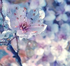 amazing white spring flower