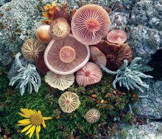 Mushroom landart by Jill Bliss