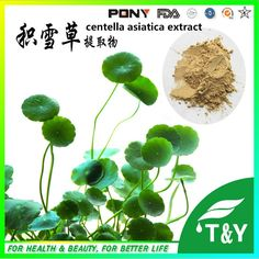 1000g Centella asiatica/ Herba Centellae/ Asiatic Pennywort Herb/ Talape/ Cat's-foot Extract with free shipping,10:1