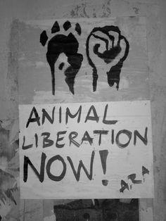 STREET ART - ANIMAL RIGHTS ART BY MARIANA CEROVECKI