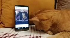 Blind cat gives pianist a hug when he hears him play - GIF on Imgur