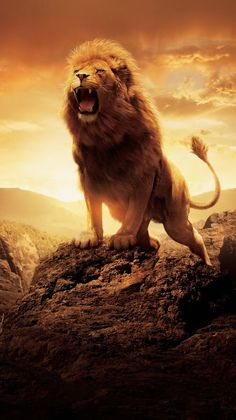 The Chronicles of Narnia: The Lion the Witch and the Wardrobe Phone Wallp. - The Chronicles of Narnia: The Lion the Witch and the Wardrobe Phone Wallpaper - Lion King Art, Lion King Movie, Lion Of Judah, Lion Art, Aslan Narnia, Wild Animal Wallpaper, Lion Photography, Lion Love, Lion Painting