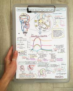 These notes on the cardiac cycle are making our heart skip a beat 😍 Nursing School Notes, Medical School, Nursing Schools, Cardiac Cycle, Studying Medicine, Medicine Notes, Science Notes, School Study Tips, Study Notes