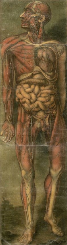 Jacques-Fabien Gautier d´Agoty (1717-1785). [ Anatomie generale des viscères en situation, de grandeur et couleur naturelle, avec l'angeologie, et la nevrologie de chaque partie du corps humain  (pinterest.com/pin/287386019946927282/) 1752].