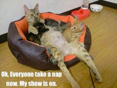 Ok, everyone take a nap now.. My show is on..