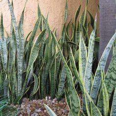Feng Shui Decoracion Plantas