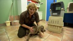 Outtake from Vet Adventures. A scene that never made it in the final episode of Grenada. Luke Gamble visits the GSPCA and comes across a very rare and strange case. Veterinary Medicine, My Passion, Grenada, Dogs, Scene, Videos, My Crush, Granada, Pet Dogs
