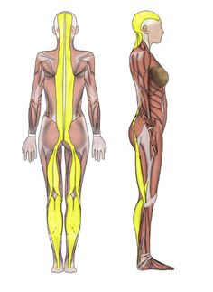 Myofascial meridians provides a map of fascial tension in the body postural functionashley black guru fascia tool fasciablaster publicscrutiny Images